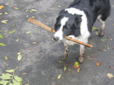 Give A Dog A Stick